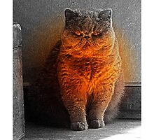 Purr-fect Light by Terri Chandler