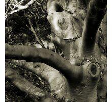 Scars Photographic Print