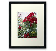 Red Roses For You! Framed Print