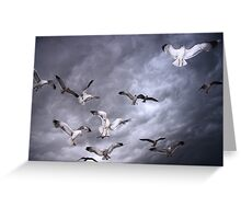 Sea Of Gulls Greeting Card