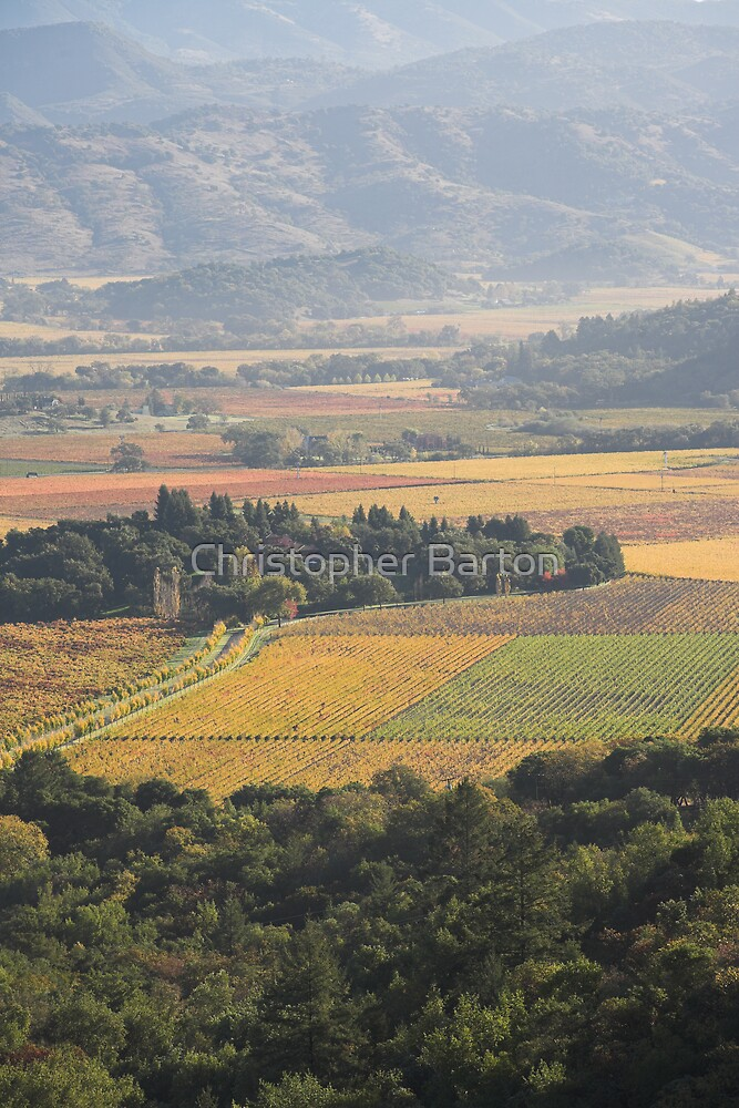 autumn , Napa Valley , California by Christopher Barton