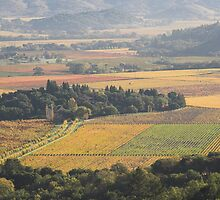autumn , Napa Valley , California by Christopher Barton