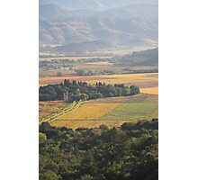 autumn , Napa Valley , California Photographic Print