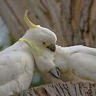 Love Birds by Mike Gregory