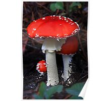 Big Red Fly Agaric Poster