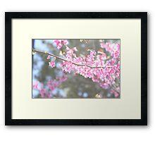 Blooms & Bees Framed Print