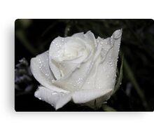 *WHITE ROSE* Canvas Print