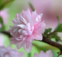Precious Pink by Kelly Cavanaugh