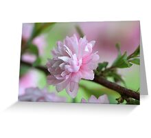 Precious Pink Greeting Card