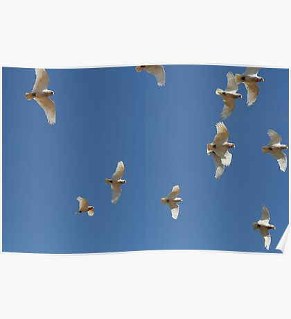 Little birdy flying high Poster