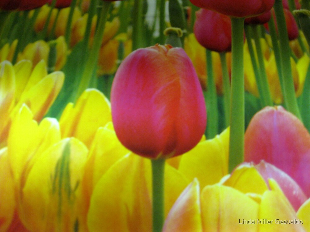Standing Out by Linda Miller Gesualdo