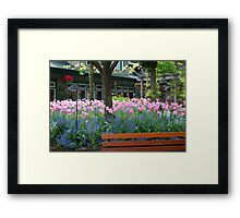 Tulips in Butchart Gardens Plaza Framed Print