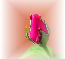 Roses Begin As Rosebuds by June Holbrook