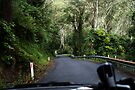 Driving Through Kangaroo Valley by Evita