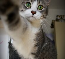 High five by Heather King