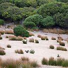 Wallaby habitat by Alexander Meysztowicz-Howen