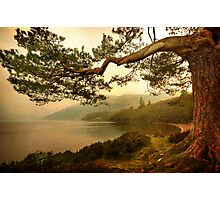 The Branch (Textured) Photographic Print