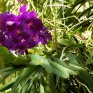purple orchid by YTYT