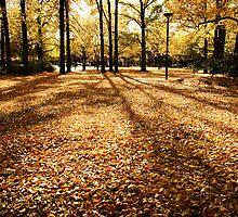Glebe Park by Michael Olive