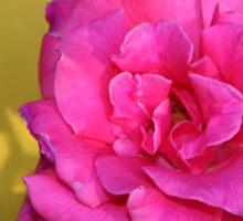 Pink Rose On Yellow Sticker