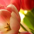 Tulips_3 by ChiaraLily