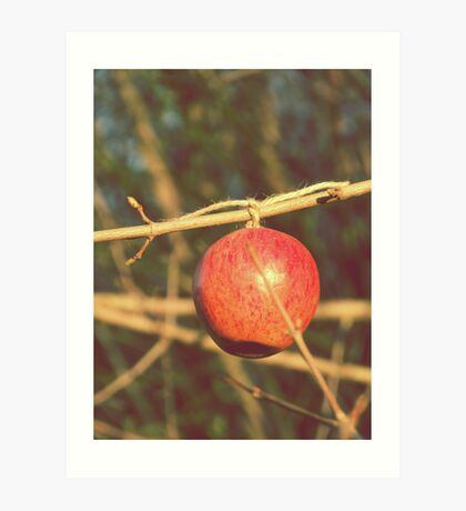 apple tree two Art Print