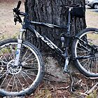 Mountain Bike Resting against a tree by kathiemt