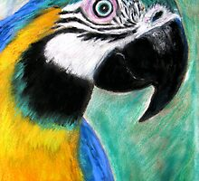 Blue & Gold Macaw by Mike Paget