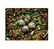Quail Eggs - HDR Art Print