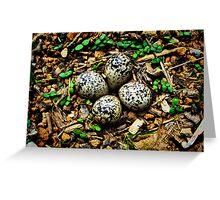 Quail Eggs - HDR Greeting Card