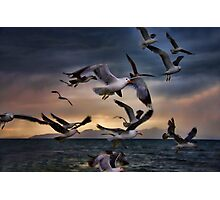 Flight Of The Seagulls Photographic Print