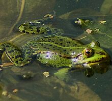 Four Eyed frog by steppeland