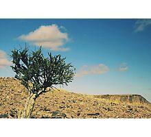 Acacia Tree, Namibia Photographic Print