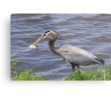 Spear fishing... Metal Print