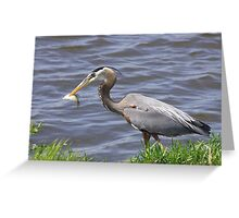 Spear fishing... Greeting Card