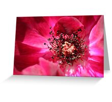 red flower  Greeting Card
