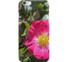 Just one rose iPhone Case/Skin