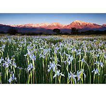 Eastern Sierra Wild Iris Sunrise Photographic Print