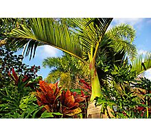 Tropical and Exotic... Photographic Print