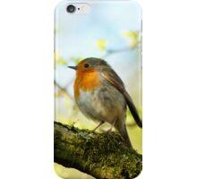 robin bird sing on a tree iPhone Case/Skin