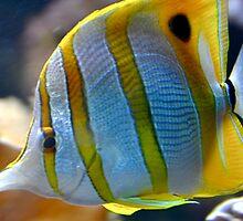 Tropical Fish by Lindsaycope