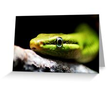 green snake eye Greeting Card