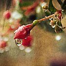 fuchsia drops by Angel Warda