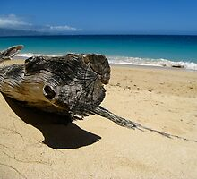 Maui, Baldwin Beach  by Sherry Lynn Crawford