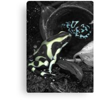 Selective Frogs Canvas Print