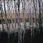 Brightwater trees by Elizabeth McMullen
