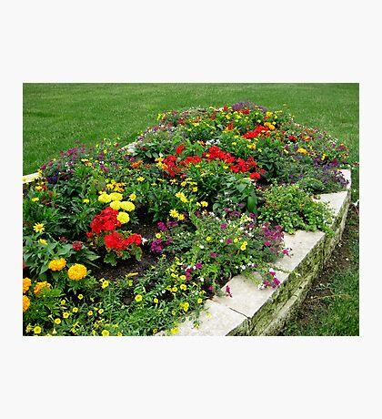 Flower Garden in My yard 1 Photographic Print