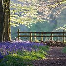 Bluebell Wood by Mark Thompson