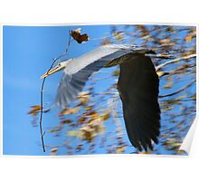 Fly With Stick Poster