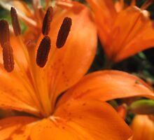 Orange Flourish by Elz-Design
